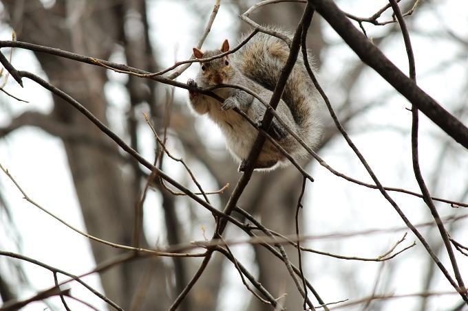 mrsquirrel